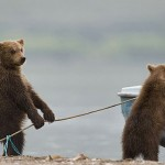 funny-bears-doing-human-things-6
