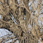 owl-camouflage-disguise-10