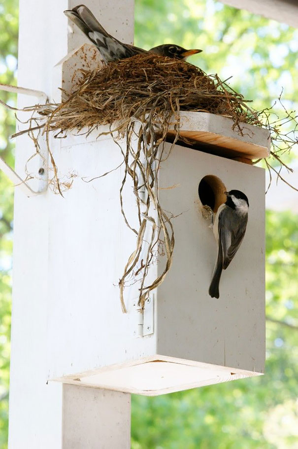 bird-nests-unusual-places-15__605
