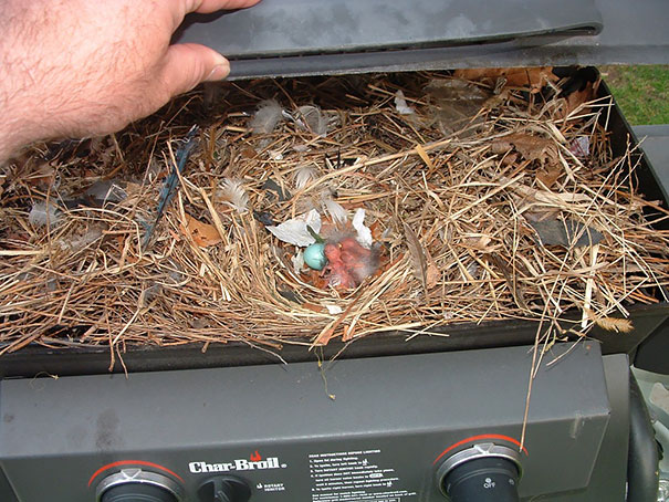 bird-nests-unusual-places-19__605