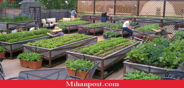 Agriculture-on-the-roof