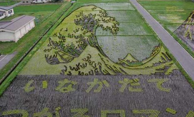 Painting on rice field (1)