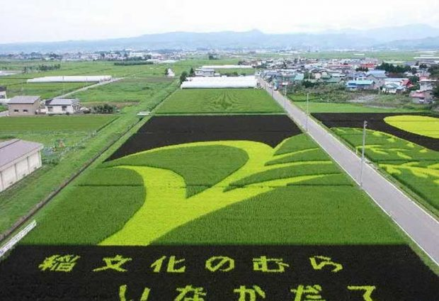 Painting on rice field (3)