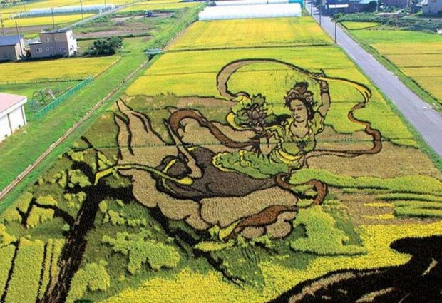 Painting on rice field (5)